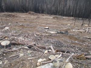 LoggingChewingUpsoil1