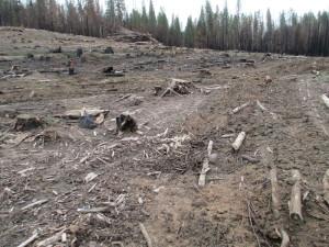 LoggingChewingupSoil2