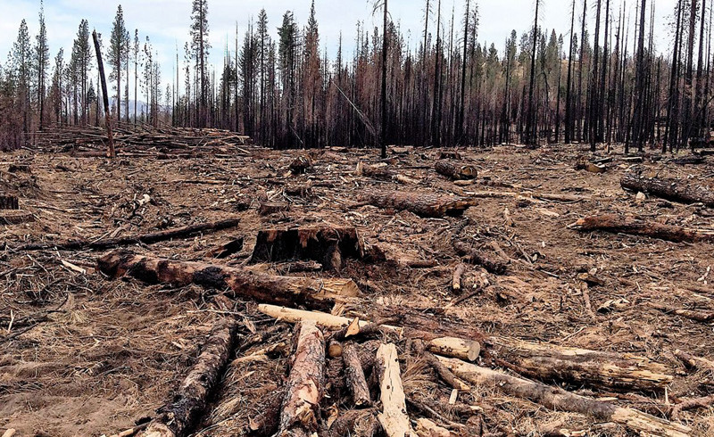 A Trillion Trees in Rep. Bruce Westerman's Hands Means A Trillion Stumps