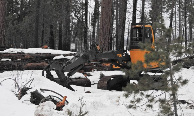 Urge the Sierra Nevada Conservancy to STOP Funding Logging in California's Forests!