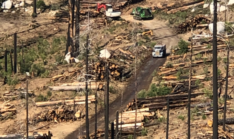 Senator Feinstein on the Wrong Path Regarding Forests